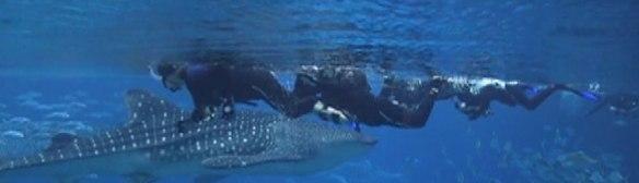 Whale-Sharks-GA