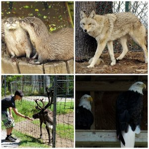 Two Rivers Wildlife Park Cape Breton Nova Scotia