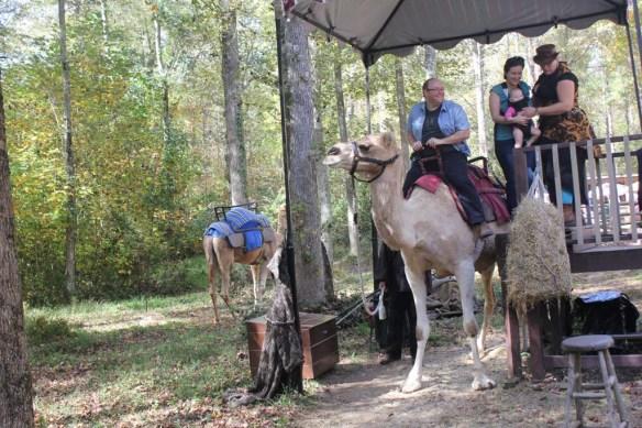 Carolina Renaissance Festival Camel Ride
