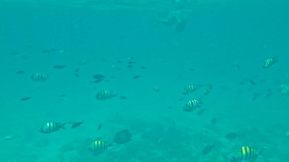 Snuba, Aruba