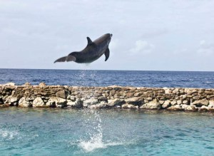 Dolphin Academy Curacao