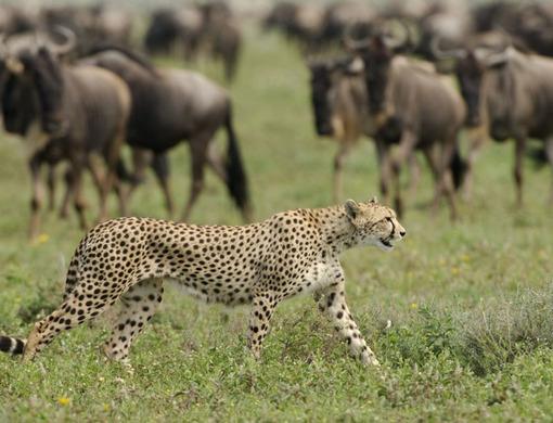Kusini Camp, Serengeti, Tanzania