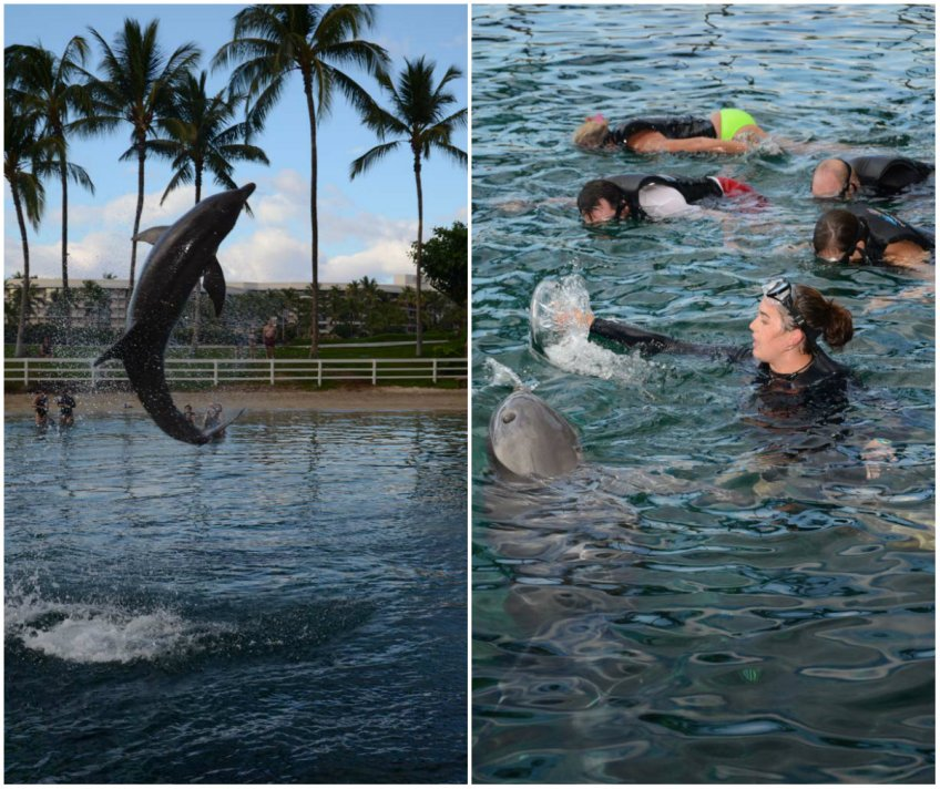 Dolphin Quest, Waikoloa