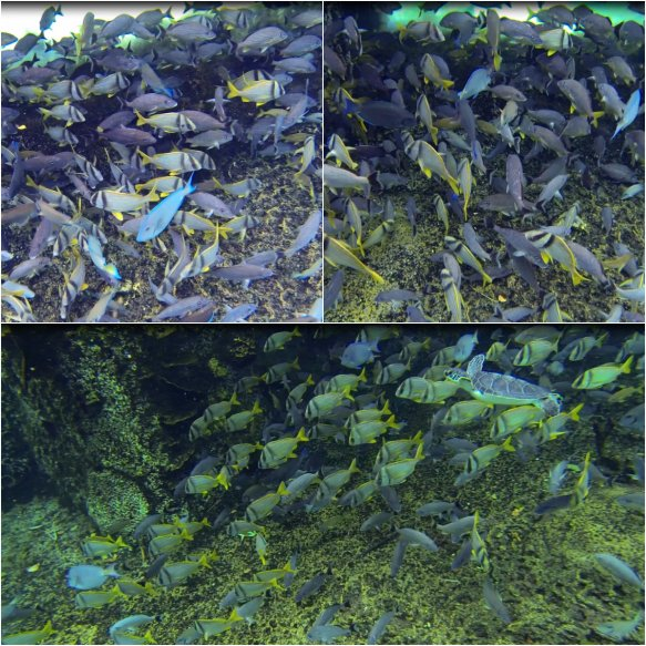Schools of Fish Cayman Turtle Farm