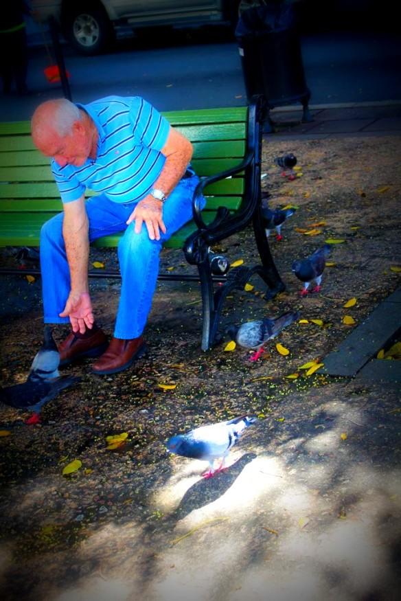 Old San Juan Pigeons in the Park