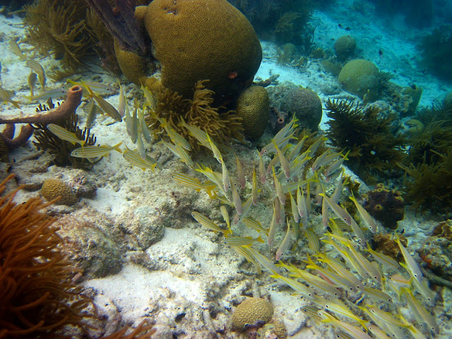Snorkeling with WoodWind Bonaire