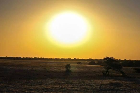 Elephant at sunset at Etosha National Park