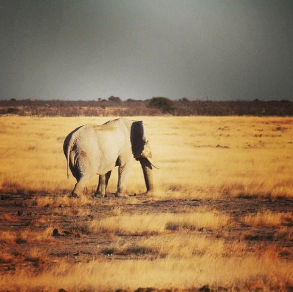 Elephant in Etosha National Park, Namibia