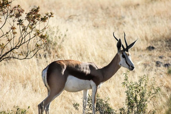 Wildlife Etosha National Park
