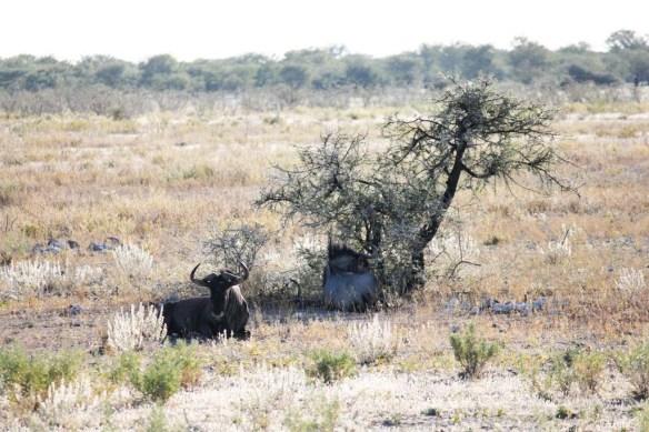 Etosha National Park, Namibia Wildlife