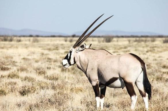 Etosha National Park Animals