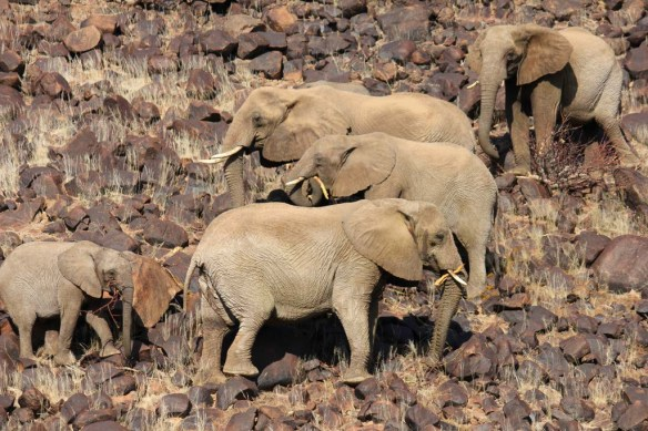 Elephants around Doro Nawas Camp, Namibia