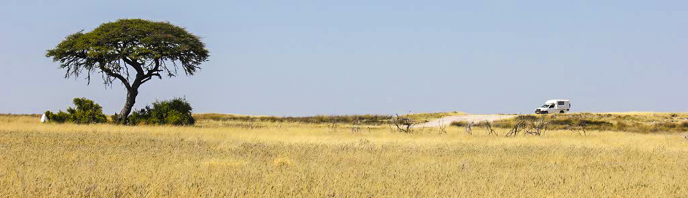 Self-Drive Safari Etosha National Park