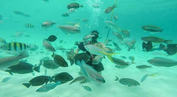Coral World SNUBA