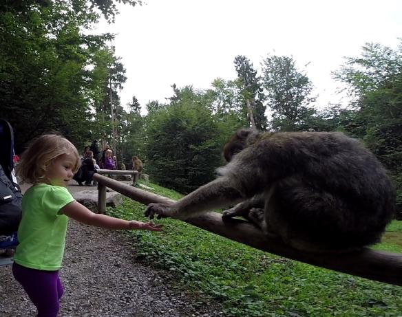 Athena Feeding the Apes in Affenburg