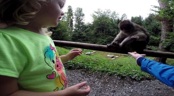 Feeding the Apes in Affenburg