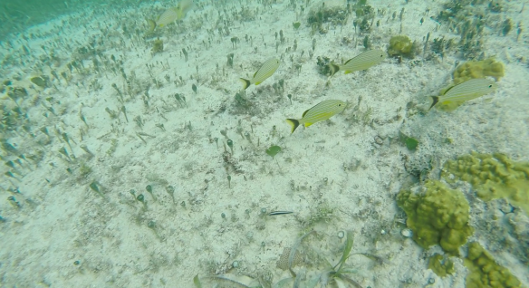 Snorkeling at Club Med