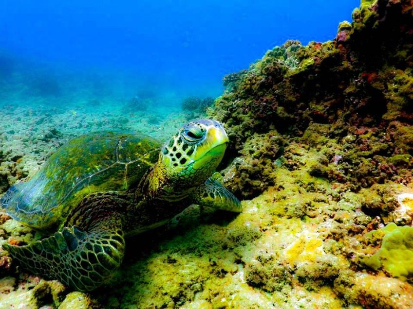 Reef Pirates Hawaii