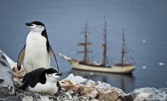 Penguins and Bark Europa