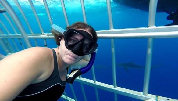 North Shore Shark Adventures, Oahu