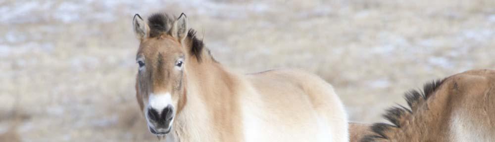 Mongolia's Hustai National Park