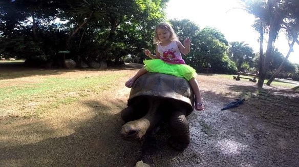 Riding a Turtle in Mauritius