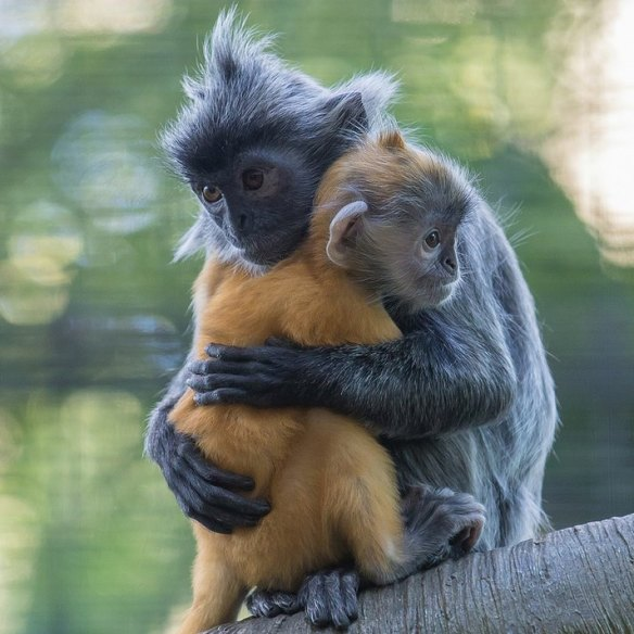San Diego Zoo Monkey Baby