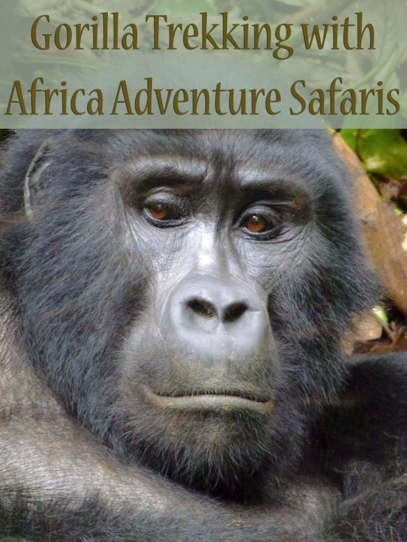 Gorilla Trekking with Africa Adventure Safaris
