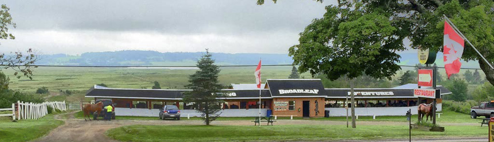 Broadleaf Guest Ranch Stables