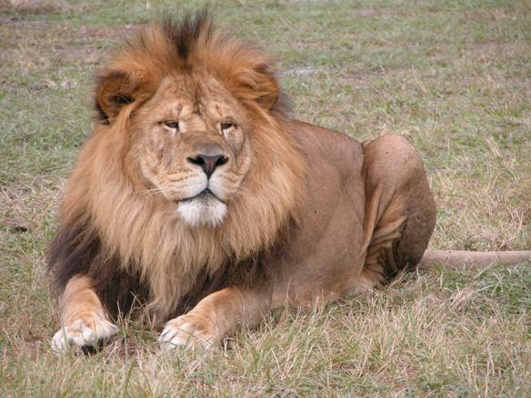 Lion Country Safari, Palm Beach
