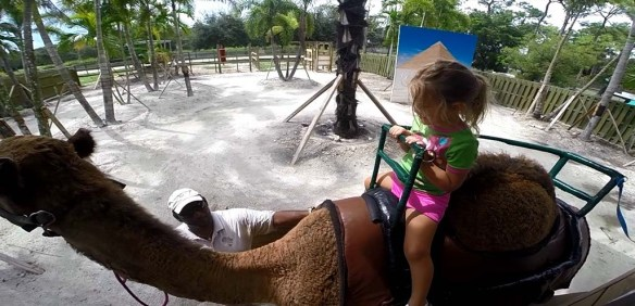 Riding a camel at Lion Country Safari, Palm Beach