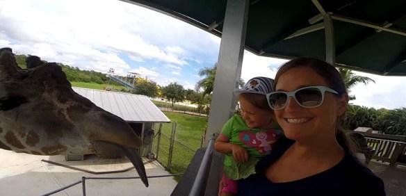 Giraffe Feeding at Lion Country Safari, Palm Beach