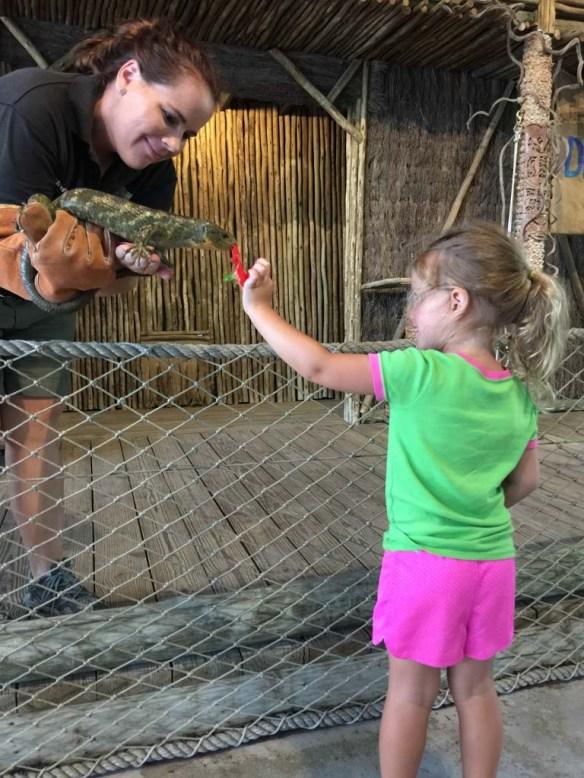 Feeding a skink at Lion Country Safari, Palm Beach