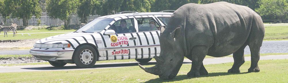 Lion Country Safari Drive