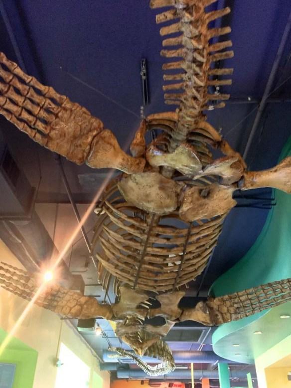 The Discovery Cube Dino Bones