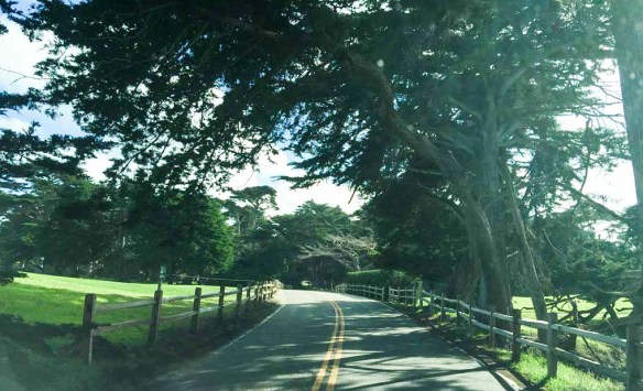 Tress on 17 Mile Drive