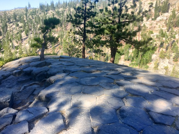 The top of Devils Postpile, Mammoth Lakes