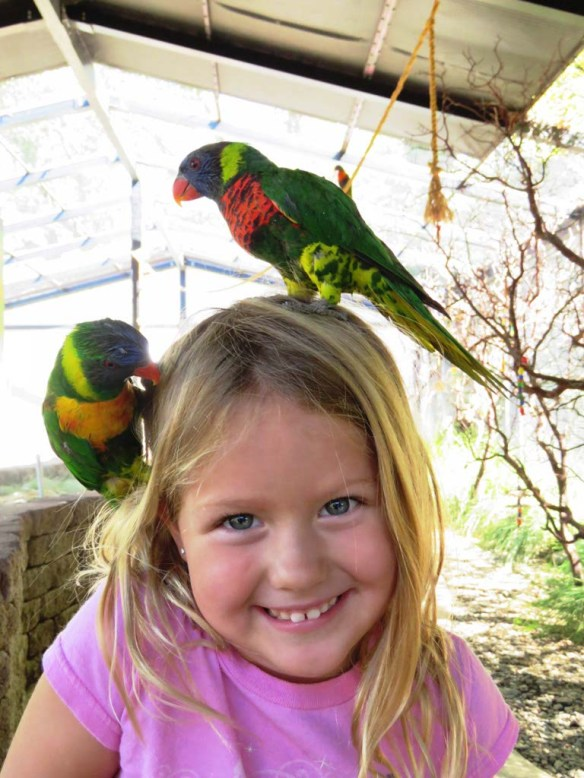 Parrot Playhouse at Turtle Bay Exploration Park