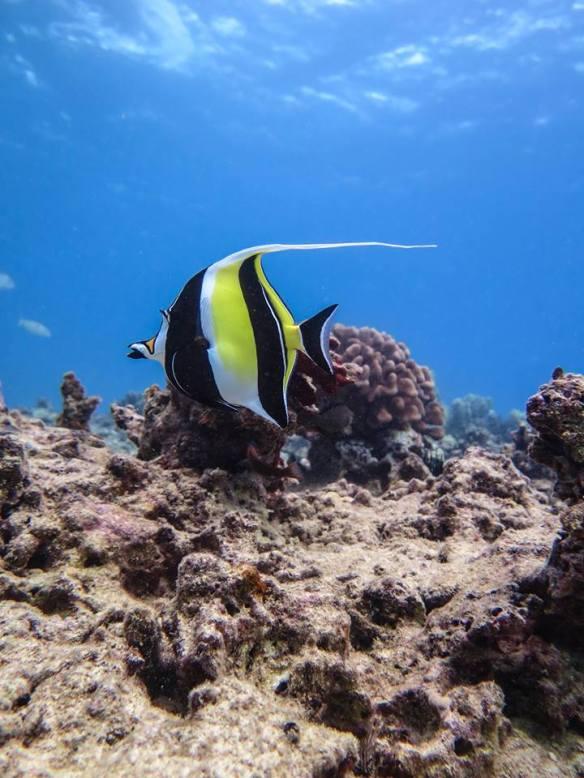Aqua Zone Scuba Diving & Snorkeling, Oahu, Hawaii